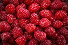 Raspberries detail. Fresh and juicy raspberries ready to eat Stock Photography
