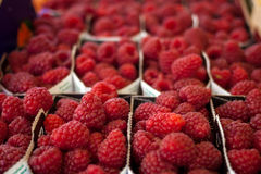 Raspberries on display for sale. Boxes of fresh, raw and colorful raspberries for sale at a farmers market Royalty Free Stock Photo