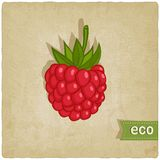 Raspberries eco background Royalty Free Stock Photos