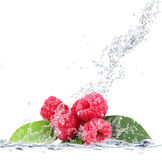 Raspberries falling in water. Fresh raspberries falling in water Stock Photography