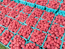Raspberries at Farmers Market Stock Photo