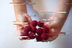 Raspberries on the fingers of a child, glitch effect stock photography