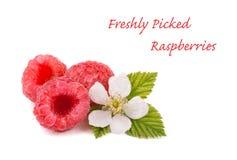 Raspberries, flower and leaves on white Stock Image