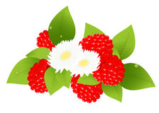 Raspberries and flowers Royalty Free Stock Photos