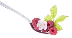 Raspberries on a fork against white. Background Royalty Free Stock Photos
