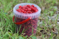Raspberries. Fresh raspberries in the bucket Royalty Free Stock Photography