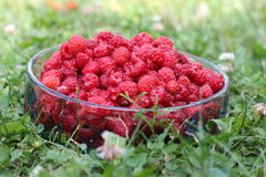 Raspberries. Fresh raspberries in the bucket Royalty Free Stock Image
