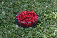 Raspberries. Fresh raspberries in the bucket Stock Photo