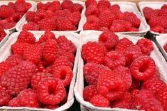 Raspberries. Fresh raspberries fruit in baskets Stock Image