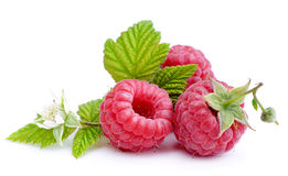 Raspberries. Stock Images