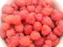 Raspberry, sweet fruits Royalty Free Stock Image