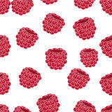 Raspberries fruit vector background Stock Images