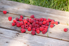 Raspberries fruits Royalty Free Stock Photos