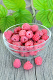Raspberries in glass bowl Stock Image