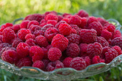 Raspberries in Glass Fruit Cup Stock Photos