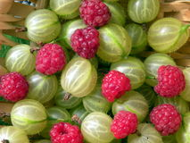 Raspberries and gooseberries Royalty Free Stock Photos