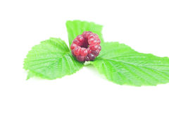 Raspberries and green leaves. On white background Stock Images