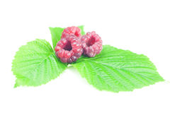 Raspberries and green leaves. On white background Stock Photos