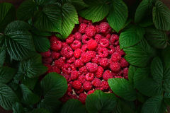 Raspberries and green leaves. Ripe red raspberries and green leaves Stock Image