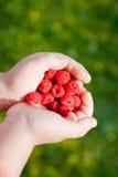 Raspberries in hands Royalty Free Stock Image