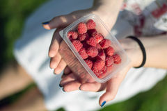 Raspberries in the hands.tif. Berries ripe raspberry on the women's palms Stock Photography