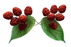 Raspberries illustration on white background. Ornamental raspberries 3d illustration on a white background with fruit and leaves Royalty Free Stock Photos
