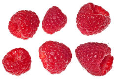 Raspberries isolated Royalty Free Stock Photo