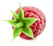 Raspberries isolated on white stock image