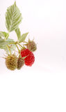 Raspberries. Isolated on a white background. Royalty Free Stock Photography