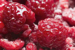 Raspberries juicy. Full-format macro view of melts on raspberries with scattered Frost crystals Stock Image