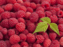 Raspberries with a leaf Stock Image