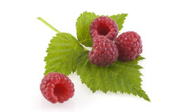 Raspberries on a leaf. Four juicy raspberries and a leaf isolated on white Royalty Free Stock Photography