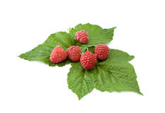 Raspberries on a leafs Royalty Free Stock Images