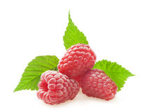 Raspberries with leafs Stock Photography