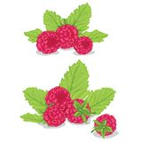 Raspberries with leaves Stock Images