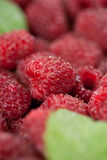 Raspberries with leaves. Close up, shallow depth of field royalty free stock images