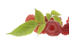Raspberries with leaves Royalty Free Stock Photos