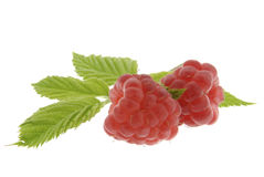 Raspberries with leaves Stock Photos
