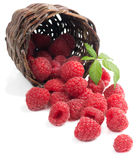 Raspberries with leaves in a basket is scattered. Fresh raspberries with leaf  in a basket is scattered   on white background Royalty Free Stock Photo