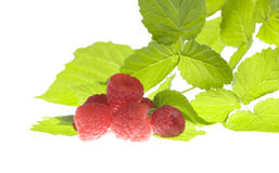 Raspberries and leaves isolated. On white Royalty Free Stock Photos