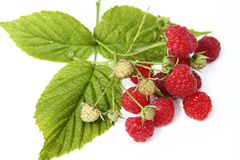 Raspberries with leaves isolated on white backgrou. Fresh raspberries with leaves isolated on white background Royalty Free Stock Photography