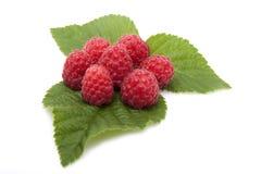 Raspberries are on the leaves raspberries Stock Photos