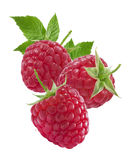 Raspberries and leaves vertical composition isolated on white Stock Images