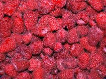 Raspberries, a lot, background, highly detailed. A lot of red raspberries at the summer, highly detailed, berries, fruits Stock Photography