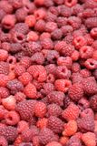 Raspberries. Lots of freshly picked rasperries Royalty Free Stock Image
