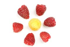 Raspberries on the white background Royalty Free Stock Photo