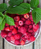 Raspberries in a metal plate. Royalty Free Stock Images