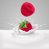 Raspberries with milk Stock Image