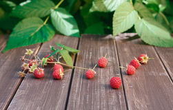 Raspberries near bush on wooden table in garden. Raspberries closeup on wooden table outdoors at raspberry bush with green leaves background. Summer harvest of Royalty Free Stock Photos
