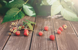 Raspberries near bush on wooden table in garden. Raspberries closeup on wooden table outdoors at raspberry bush with green leaves background. Summer harvest of Stock Image